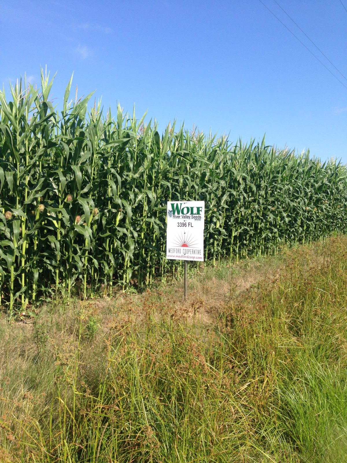 Dairy Producers and Wolf River Valley Seeds