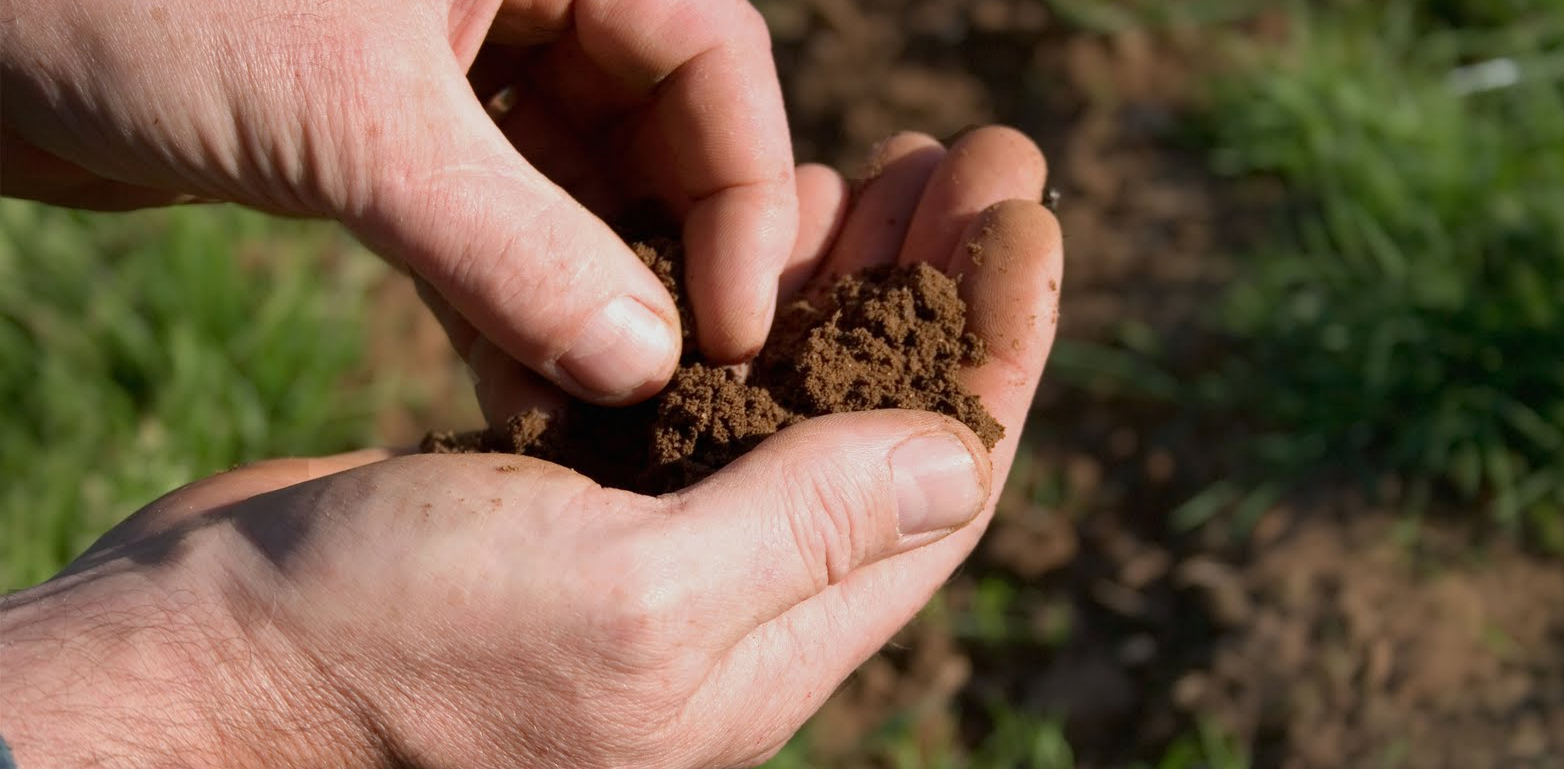 Why Test Your Soil?