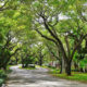 Street view in Coral Gables