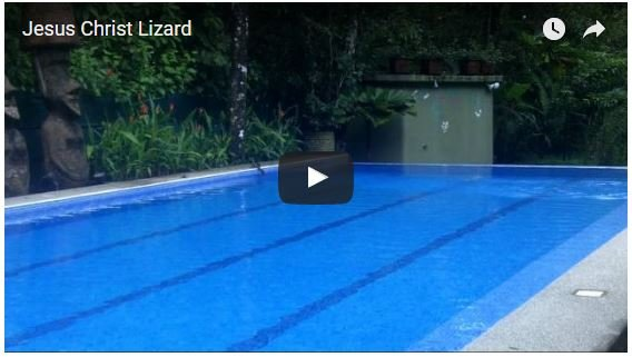 Costa Rica Vacation Homes Where You May Just See a Jesus Christ Lizard Walk on Water