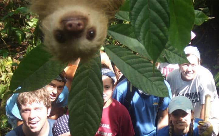 upside down 2-toed sloth