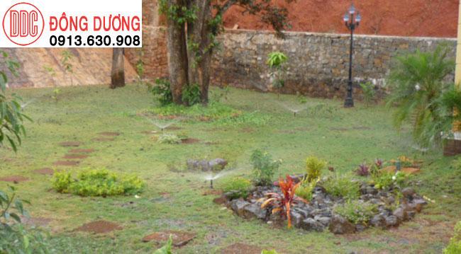 Tưới cỏ sân vường biệt thự vườn Đăk Nông