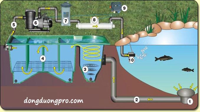 Các vấn đề liên quan khi xây hồ cá Koi