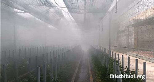 Tưới phun sương trong nhà lưới