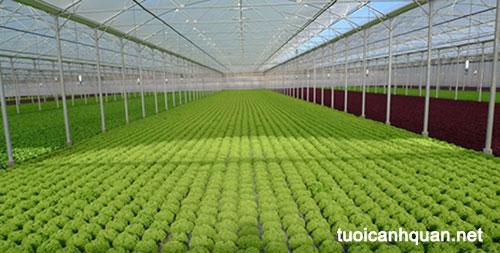 Hệ thống nhà màng trồng rau sạch