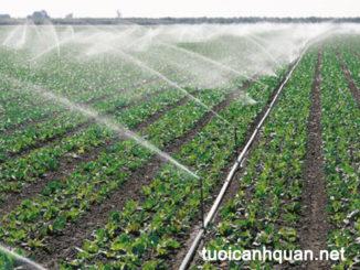 Giải pháp trồng rau sạch trong nhà lưới