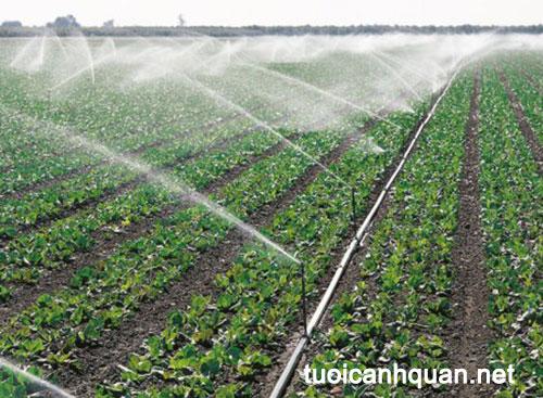 Tưới phun mưa nông nghiệp