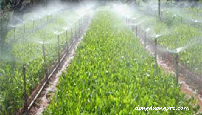 Thiết kế hệ thống tưới phun mưa
