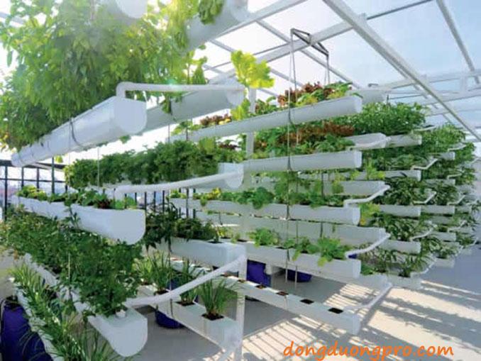 Cách trồng rau sạch tại vườn nhà