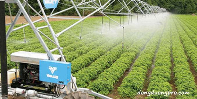 Hệ thống tưới phun mưa cho rau qui mô rộng rộng lớn