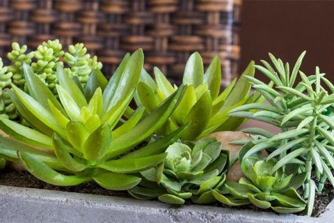 Nearly Natural Succulent Arrangement