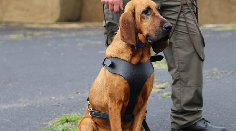 Trained Scent Discriminate K9's
