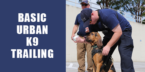 Basic Urban K9 Training