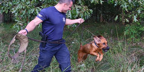 Law Enforcement Trained K9's