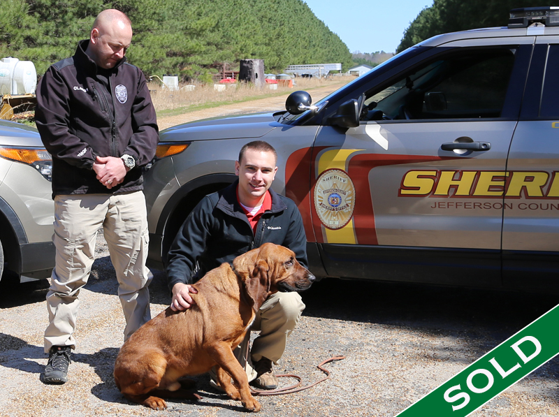 JeffCo- Zeus - Trained K9's for sale -SOLD
