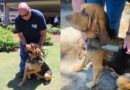 Liberty County Bloodhound Finds Missing Juvenile and Fleeing Suspect