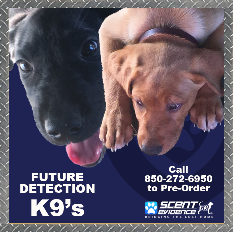 Trained K9s for Sale