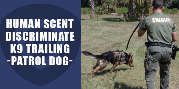 Human Scent Discriminate Patrol Dog Training