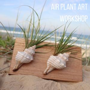 Air plant workshop
