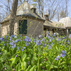 Bluebells and Pool House