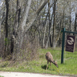 Deer and Donges Bay Gorge sign