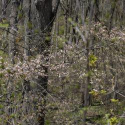 spray of woodland wildflowers