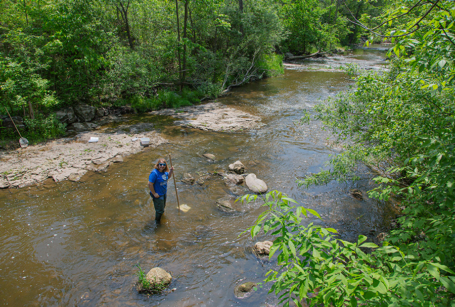 Milwaukee Riverkeeper, Cheryl Nenn with net demonstrating how to catch macro-invertebrates in the creek