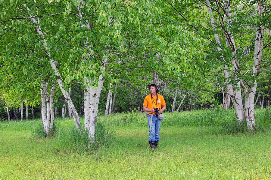 a man with a camera in a birch grove