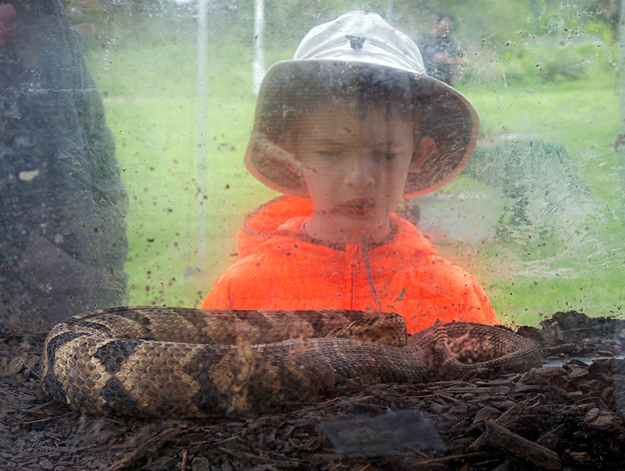 boy looking at a rattlesnake in a glass tank