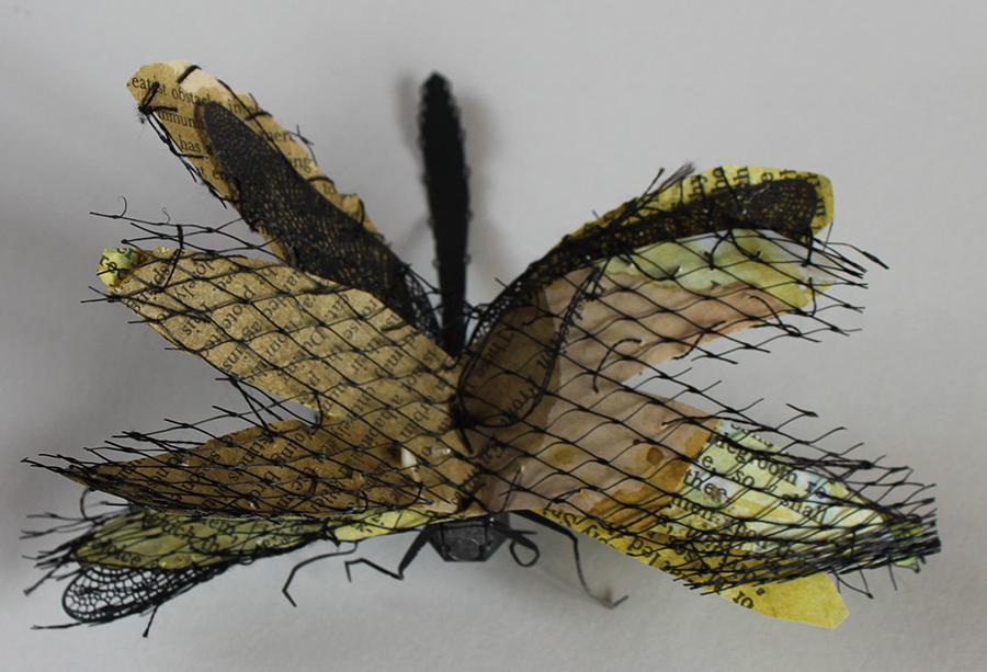 """Specimen #13,"" handmade butterfly book"