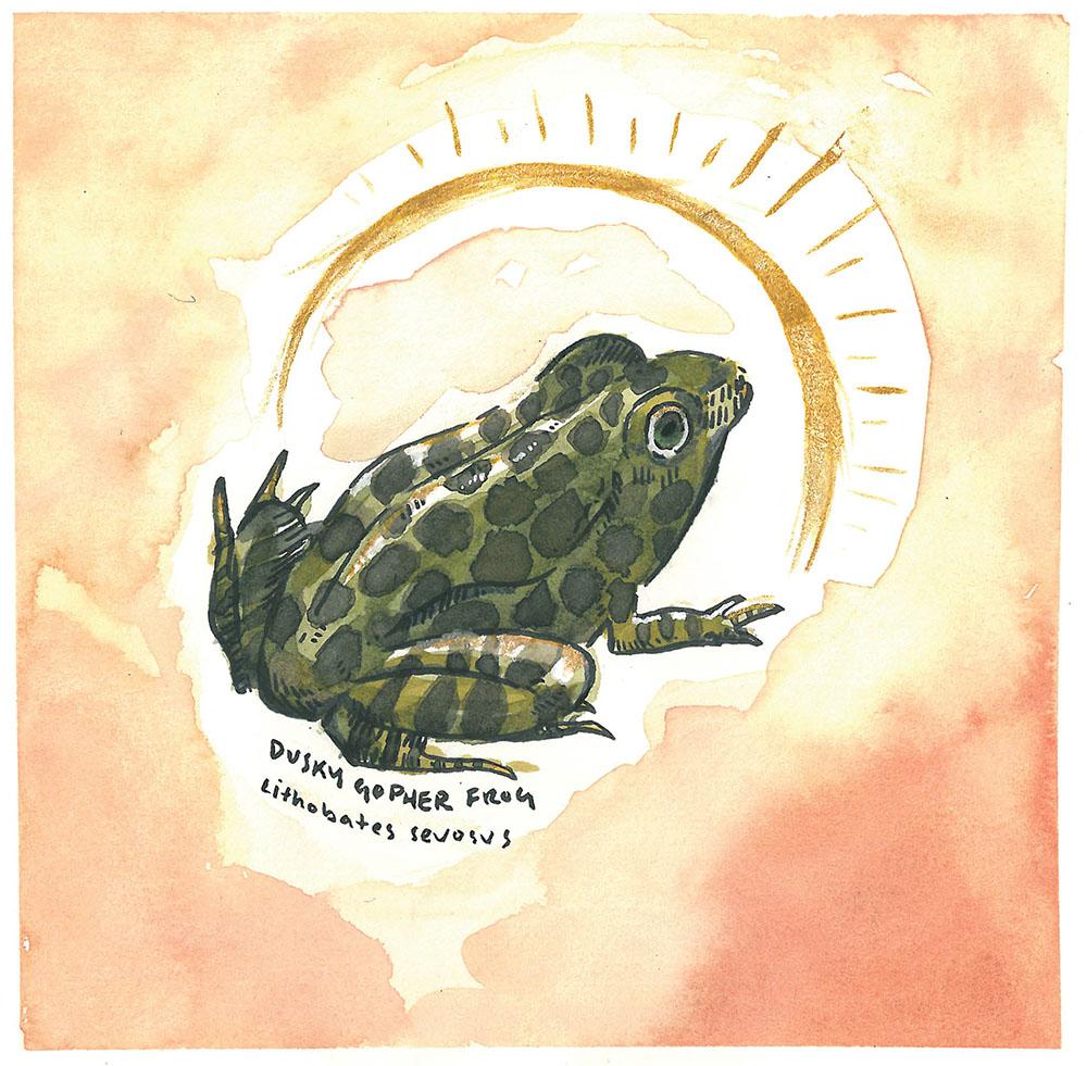 """Dusky Gopher Frog,"" watercolor, 8.5""x8.5"""