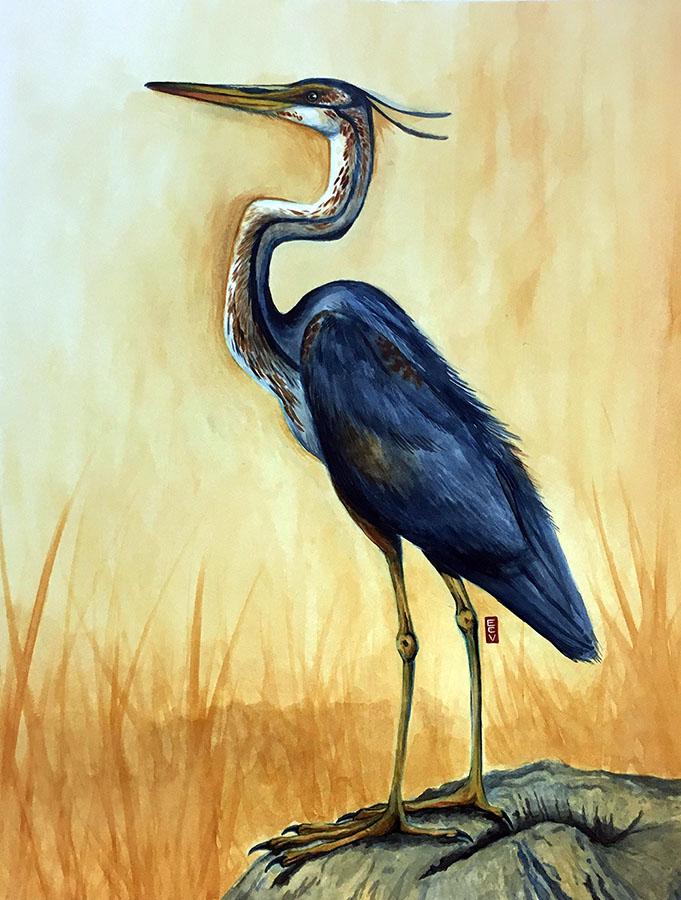 """Great Blue Heron,"" watercolor, 18""x20"""
