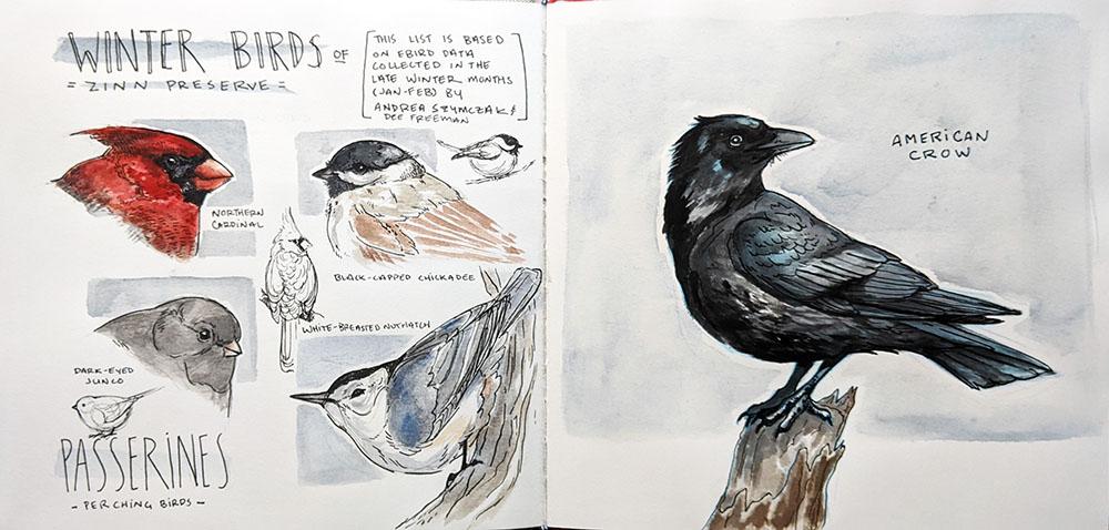 """Winter birds of Zinn Preserve,"" watercolor and micron pen"