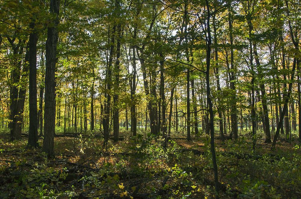 Sun setting through the woods. Bratt Woods State Natural Area.