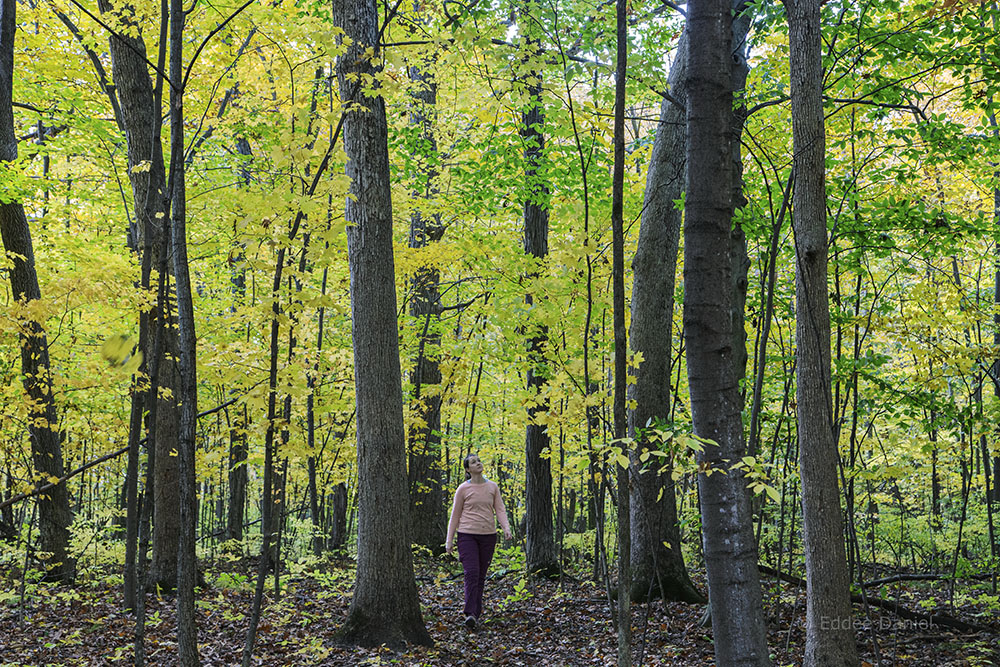 Beth Stoddard, artist in residence, in Fitzsimmons Woods