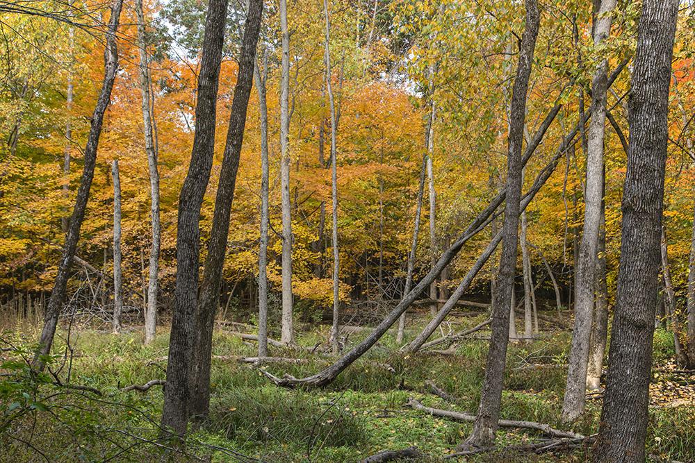 Wetland, Grootemaat Nature Preserve