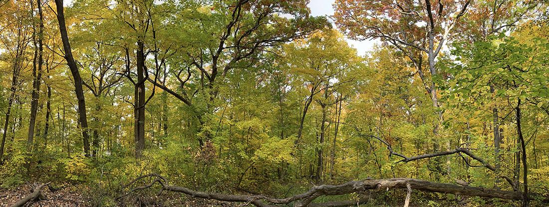Grootemaat Park autumn panorama