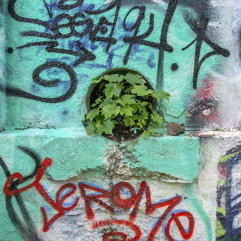 "Grafitti on the ruins of the Gordon Park bathhouse, an example of ""Synecdoche"""