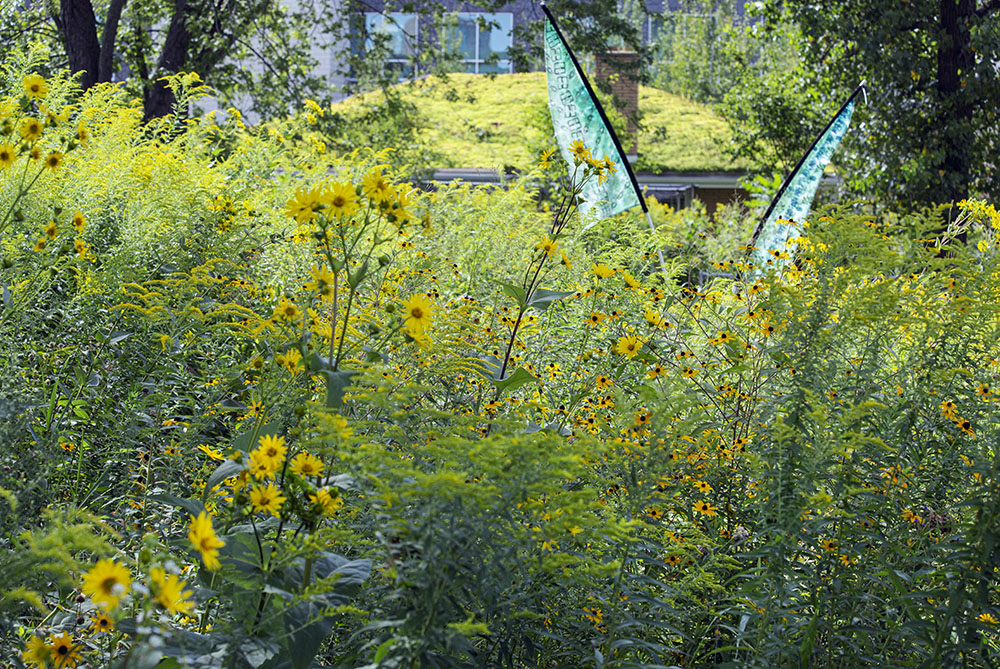 Turtle Park wildflowers and River Revitalization Foundation headquarters