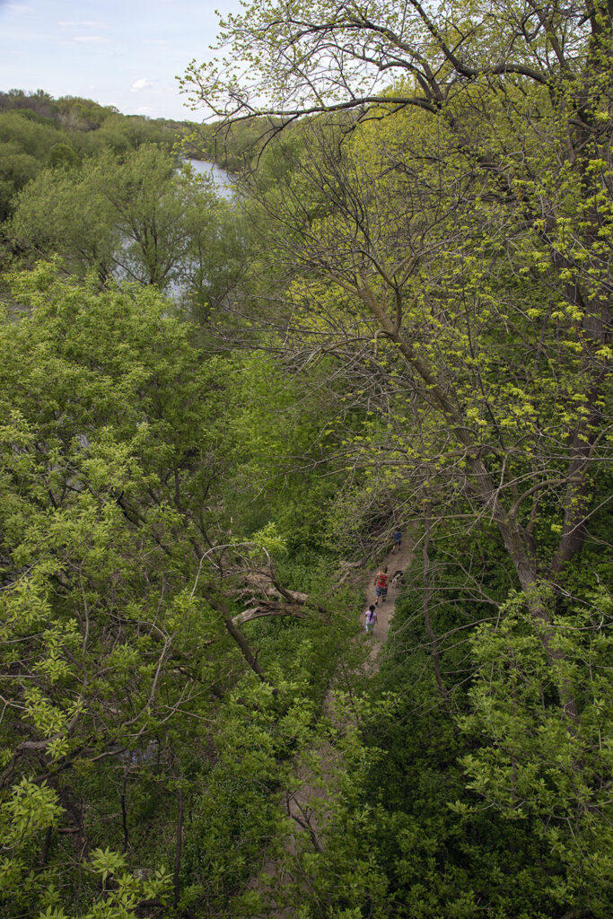Hikers on the Forked Aster Trail in Cambridge Woods, viewed from the Locust Street bridge