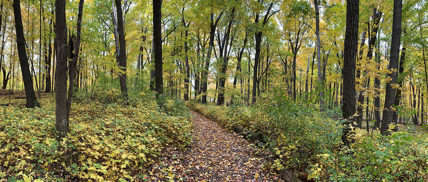 Woodland Trail panorama