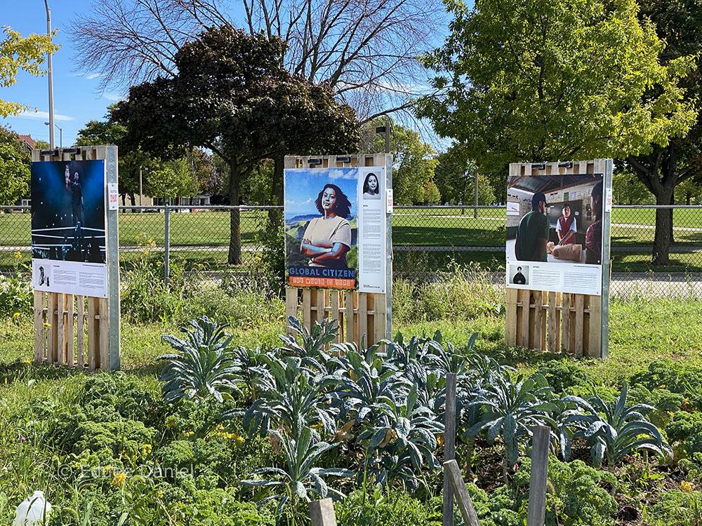 Three Art Start posters in the garden.