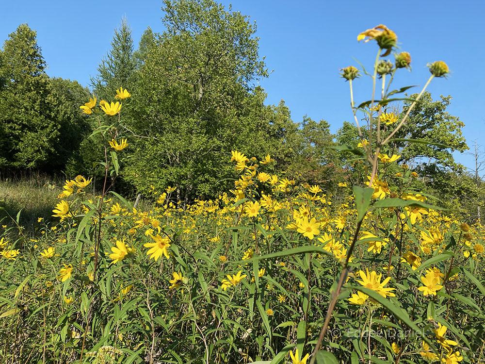 Prairie wildflowers.