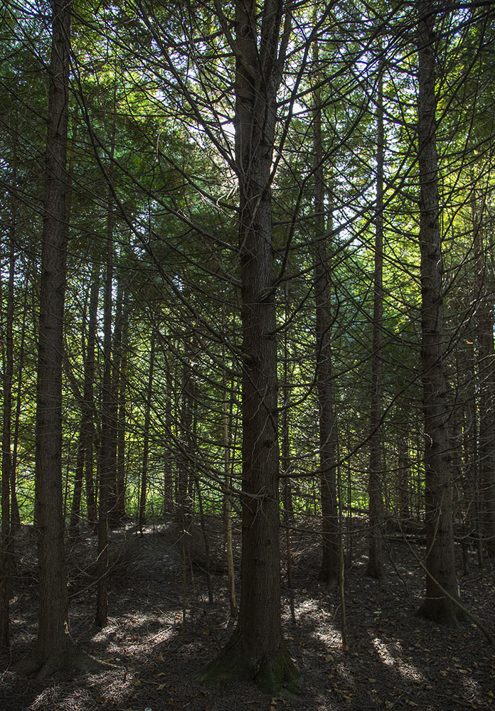 In the pines.