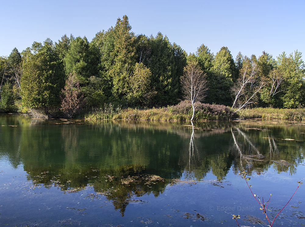 Pond and reflection.