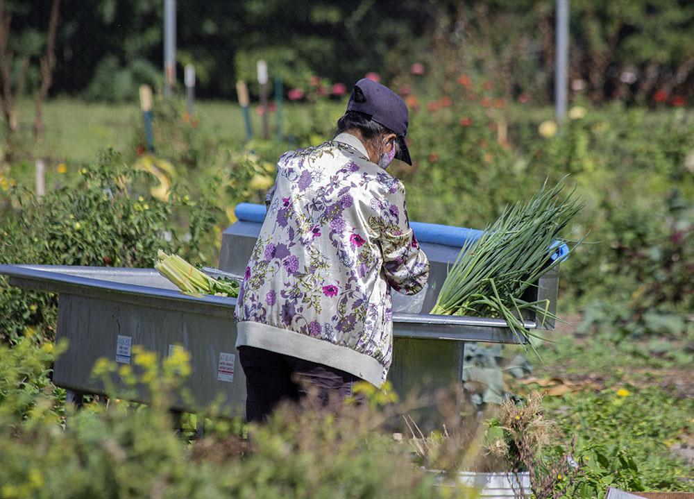 An urban farmer washing vegetables.