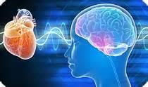 communication brain heart