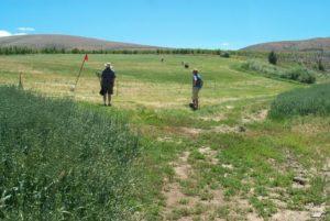 pasture golf