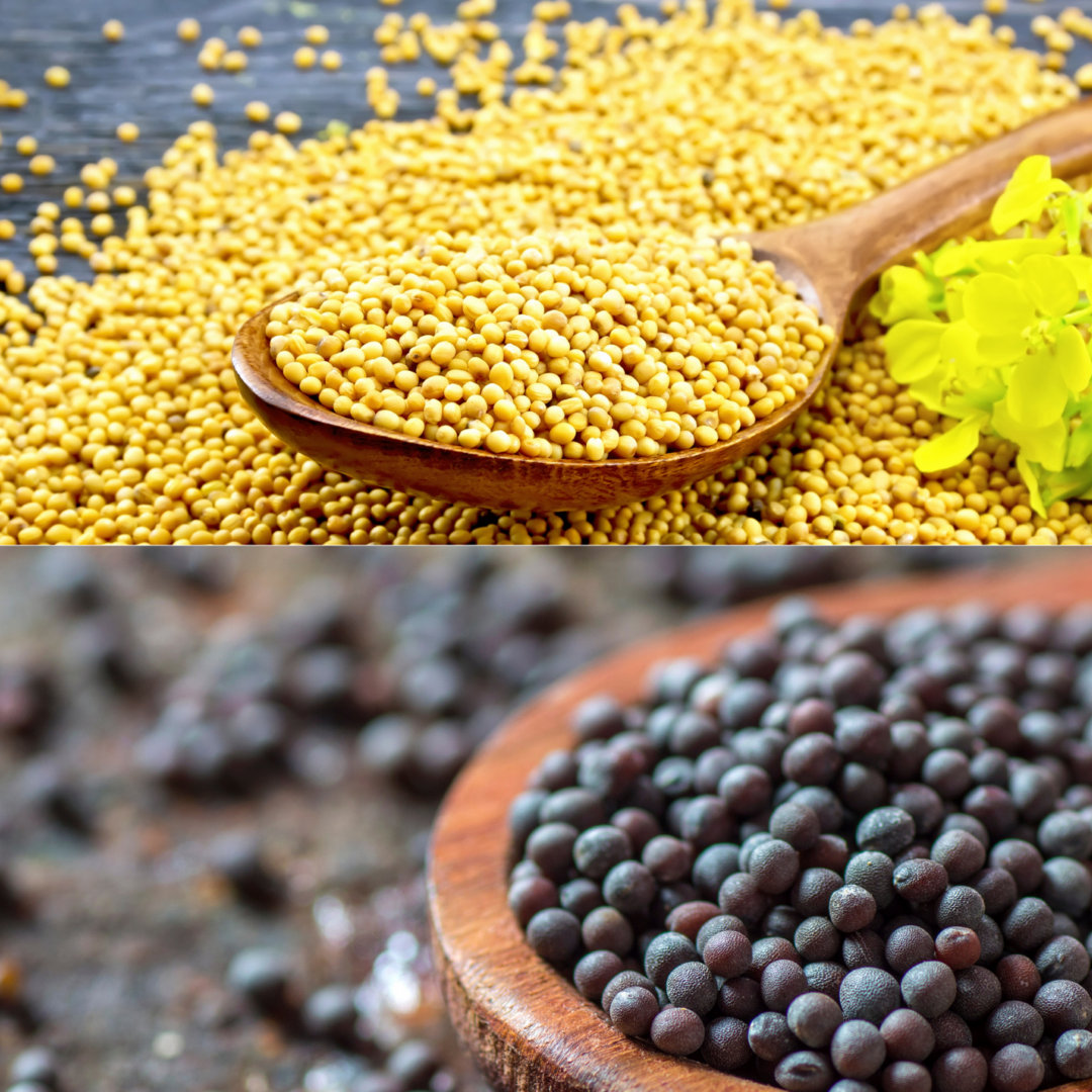 MUSTARD SEED YELLOW AND BLACK