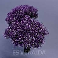 Trachelium - Andante Image